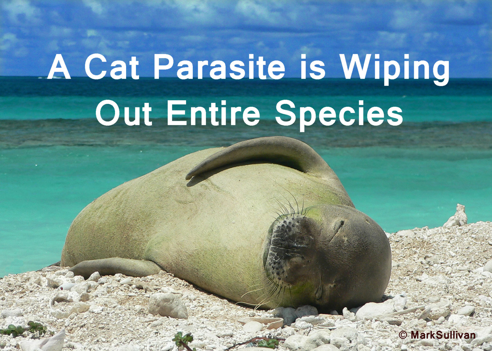 A Cat Parasite Is Wiping Out Entire Species